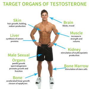 Can You Test Testosterone Levels at Home